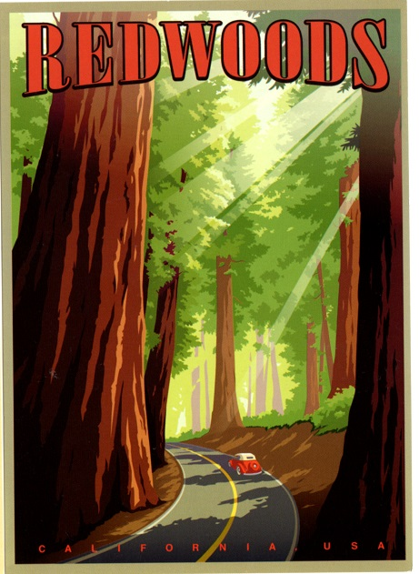 Redwoods illustrated