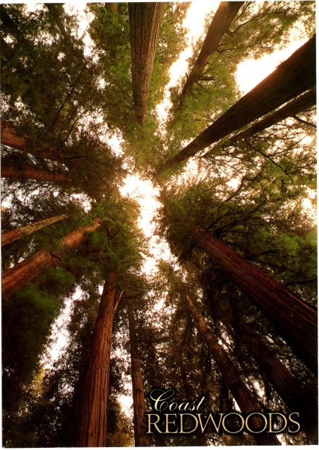 Coast Redwoods tree ring